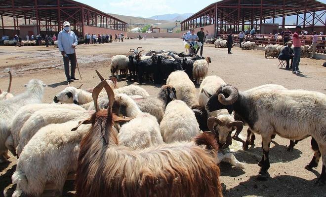 Tarım ve Orman Bakanlığı: Satılamayan kurbanlıkları Et ve Süt Kurumu alacak