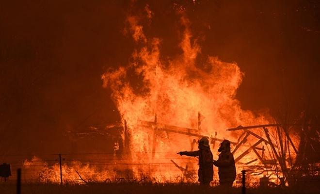 Yangınlar Avustralya'daki ormanların beşte birini yok etti!
