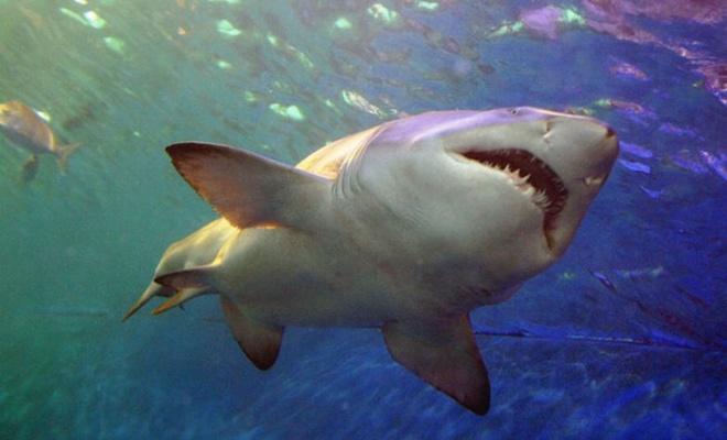 Köpekbalığı saldırısında 2 kişi ağır yaralandı