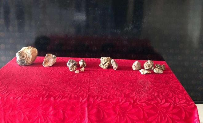 Gaziantep'te bir evde Paleolitik döneme ait fosil ele geçirildi