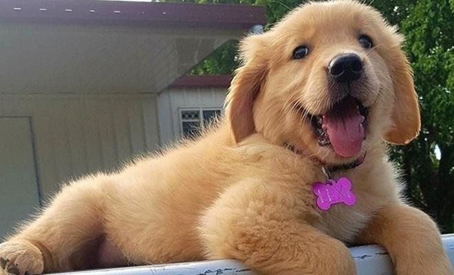 Evcil hayvanlara pasaport ve mikroçip zorunluluğu!