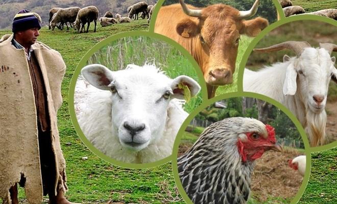 Türkiye`deki hayvan sayısı açıklandı