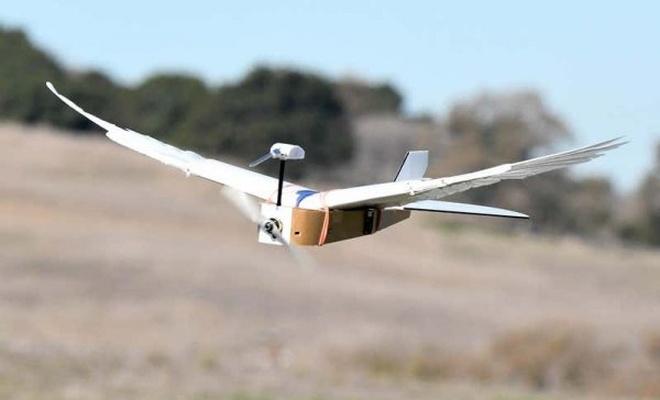 Gerçek güvercin tüylerine sahip uçan robot