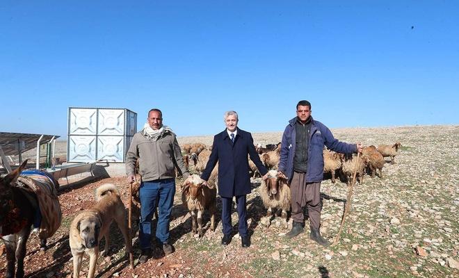 Gaziantep'te hayvan yetiştiricilerine verilen destekler sürüyor
