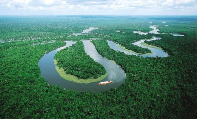 Amazon ormanları yok edilirse ne olur?