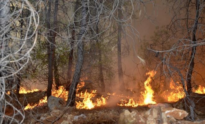 Antalya'daki orman yangınlarında 80 dekar kül oldu