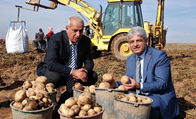 """""""Patatesin kent ekonomisine katkısı yıllık 260 milyon TL'dir"""""""