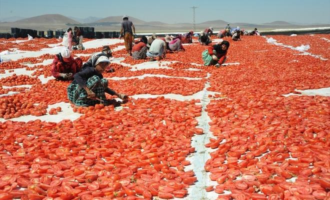 Niğde'de kurutulan domatesler 6 ülkeye ihraç ediliyor