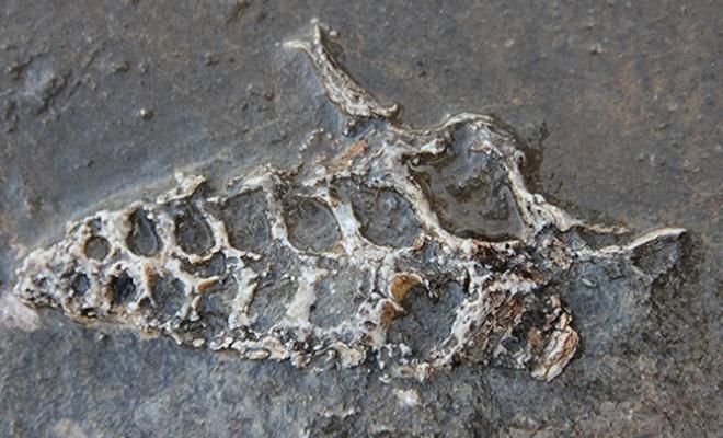 Adıyaman'da 70 milyon yıllık fosil bulundu