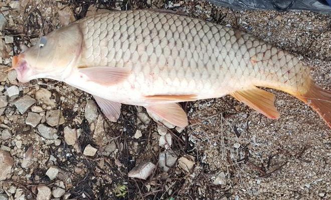 4 adet balık avladılar: 147 bin lira ceza yediler!