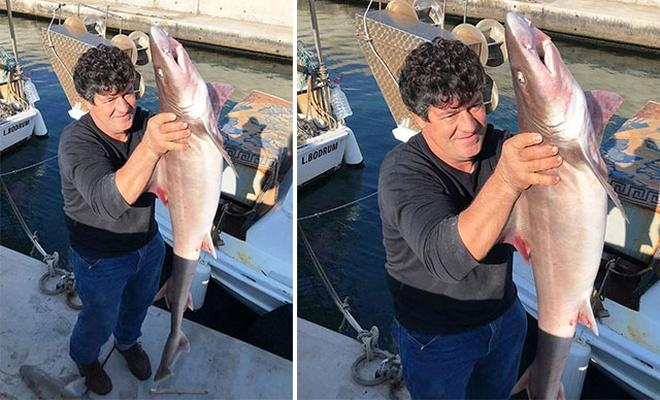 Balıkçı ağına 2 köpek balığı birden takıldı