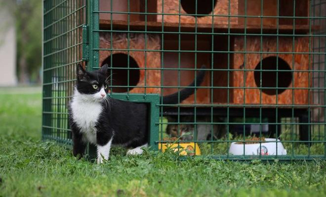 Sokak kedileri için park ve yeşil alanlara kedi evleri kuruldu