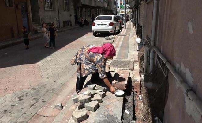 İstanbul'da mahallede yılan tedirginliği! Süt bırakıp beklediler