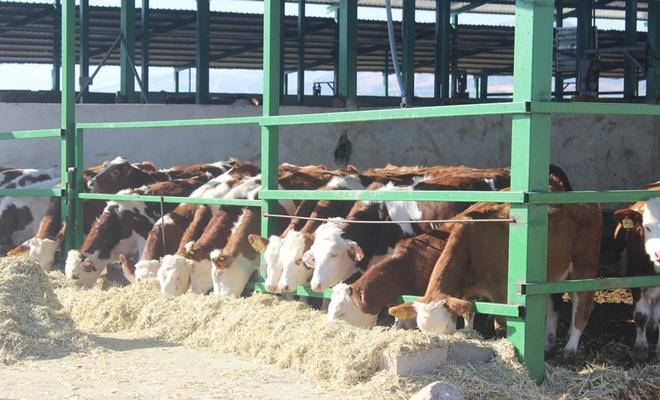 Süt üreticileri zamlardan şikâyetçi