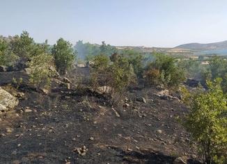 Fırat Nehri yakınlarında çıkan yangın fidanlık alana sıçradı