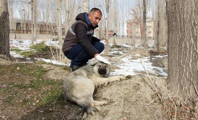 Sokak köpekleri Büyükşehir Belediyesi kontrolünde
