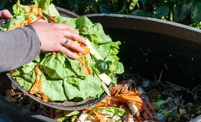 Gıdaların üçte biri israf ediliyor!