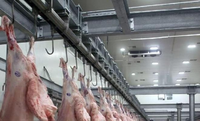 Bursa'da büyükbaş hayvanlarda şarbon tespit edildi
