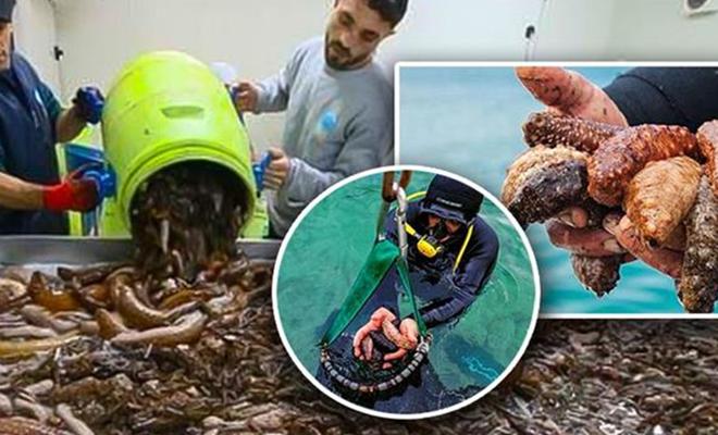 """Bakan Pakdemirli: """"Deniz patlıcanı avcılığı sona erdi"""""""