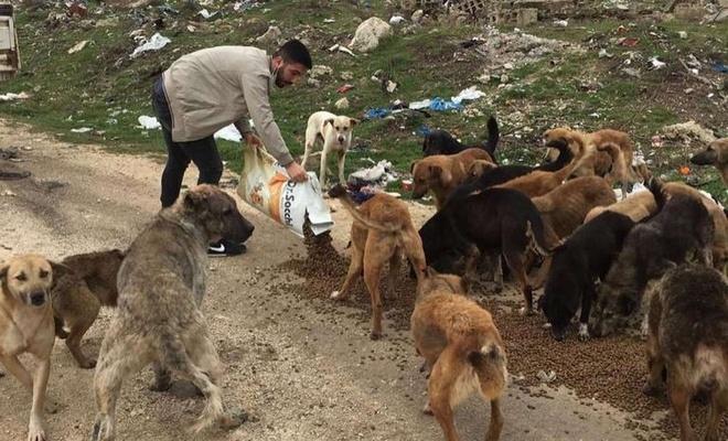 Kırklareli Valiliği tarafından sokak hayvanlarına yem verildi