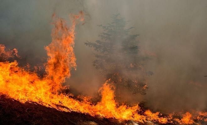 Muğla'daki orman yangınlarında 'sabotaj' iddiası