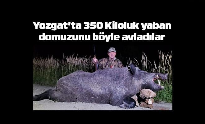 Yozgat'ta 350 kiloluk yaban domuzu avlandı
