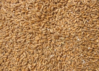 TMO: Buğday stokları yeterli