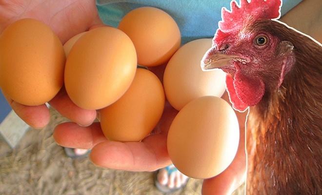 Tavuk eti üretimi arttı, yumurta üretimi azaldı