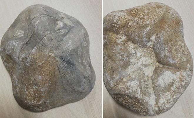 4 milyon liralık taşlaşmış fosil ele geçirildi