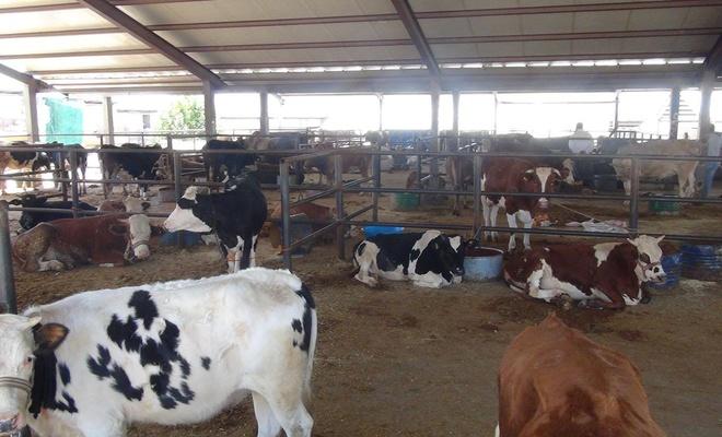 Adıyaman canlı hayvan pazarında sessizlik hâkim
