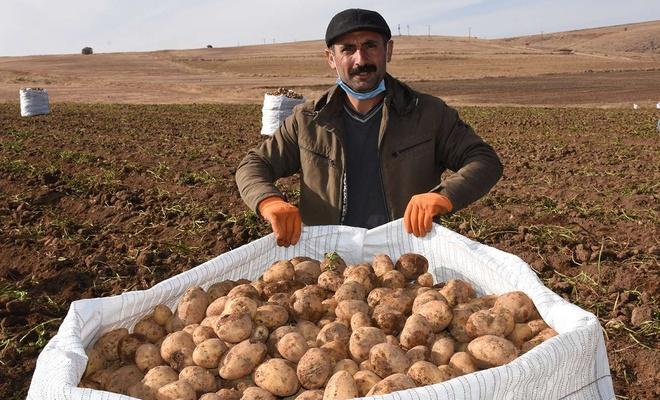 Türkiye patates ihtiyacının yüzde 10'u  orada üretiliyor