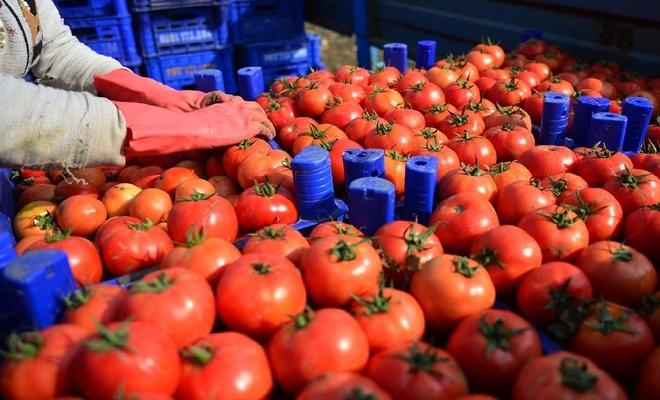 Rusya'nın domates kotasını artırması sektörü sevindirdi