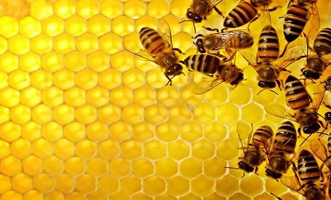 Arı ürünleri kemoterapinin yan etkilerini azaltıyor mu?