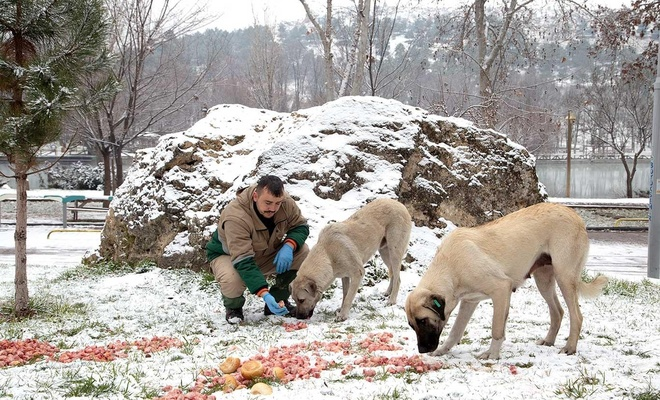 Yaban hayvanları için doğaya yiyecek bırakıldı