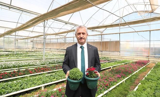 Şahinbey Belediyesi tam otomasyonlu seralarda çiçek yetiştiriyor