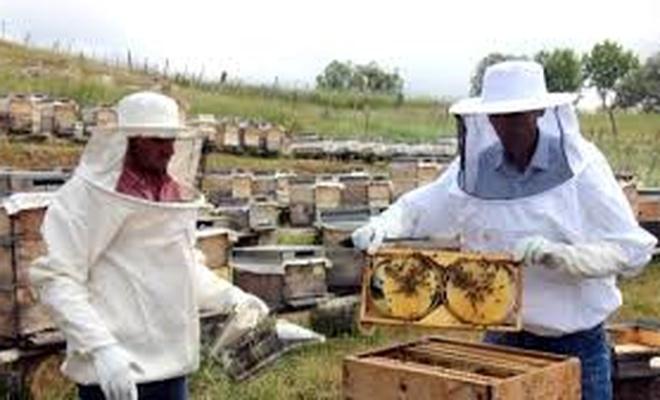 Sivas'ta devlet desteğiyle bal üreticilerinin sayısı artıyor