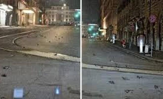 Yılbaşı gecesi, havai fişekler yüzünden sokaklar kuş ölüleriyle doldu