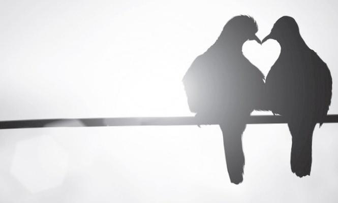 Aşkın Nevileri