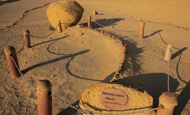 Mısır çöllerindeki 40 milyon yıllık balina fosilleri