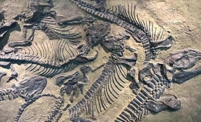 Bu dinozor kalıntıları 70 milyon yıllık!