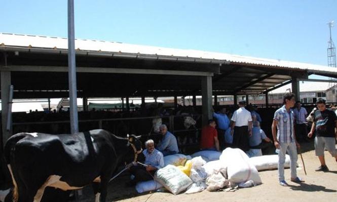 Hayvan satıcıları yem fiyatlarından şikayetçi
