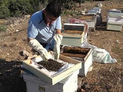 Mersin'de 1 milyon 200 bin arı telef oldu