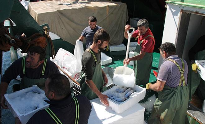 Karadeniz`de palamut bolluğu balıkçıların yüzünü güldürdü