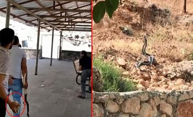 Adıyaman'da bir tarafta yılanla sohbet ettiler, diğer tarafta taşladılar
