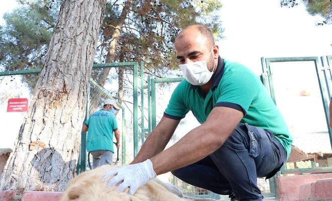 Gaziantep'te sokak hayvanları için yeni barınak yapılacak