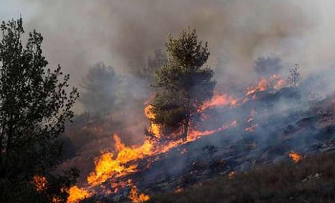 """""""Ekini ve nesli tahrip eden"""" siyonist işgalciler, El-Muğayyir'de 14 dönüm araziyi yaktı"""