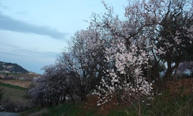 Havaya cemre düştü Adıyaman`a bahar geldi