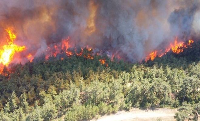 Aydın'daki orman yangınıyla ilgili bir tutuklama