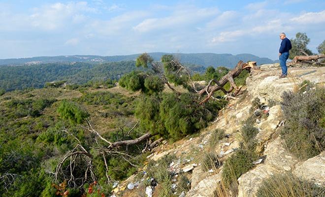 Bin 511 ağacı kesen şahıs serbest bırakıldı