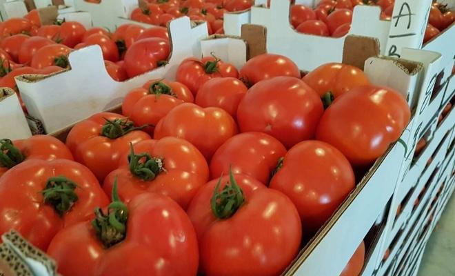 Antalya Valisi Karaloğlu: Rusya'ya domates kotası kaldırılmalı